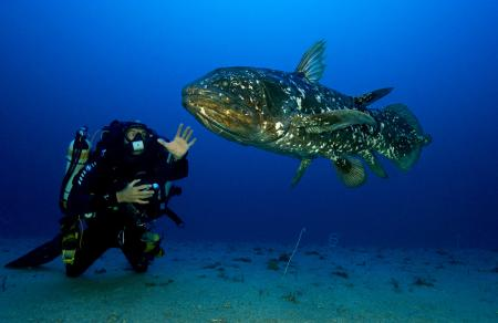 The legendary Coelacanthe